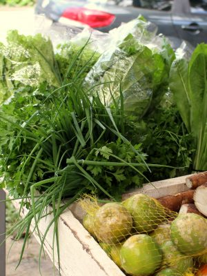 secretaria_da_agricultura_incentiva_investimentos_na_producao_de_organicos_20180226_1913234957