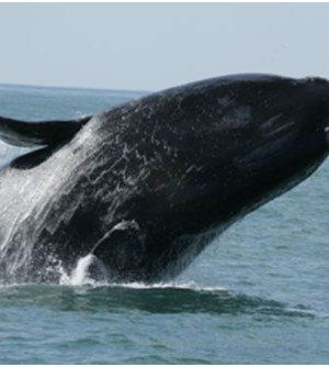 divulgacao-projeto-baleia-franca-1