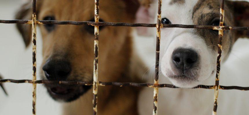 cachorros-foto-de-jhulian-pereira-1